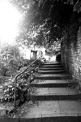 Steps leading to Harrison Training